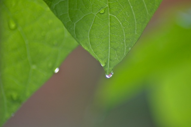 wondrous raindrops