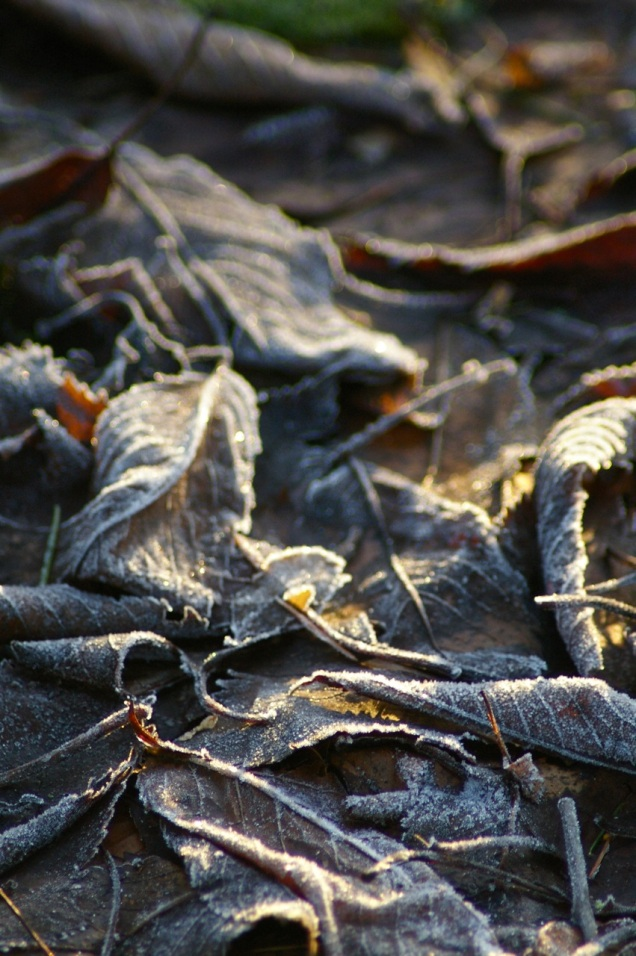 early morning sunlight on frost