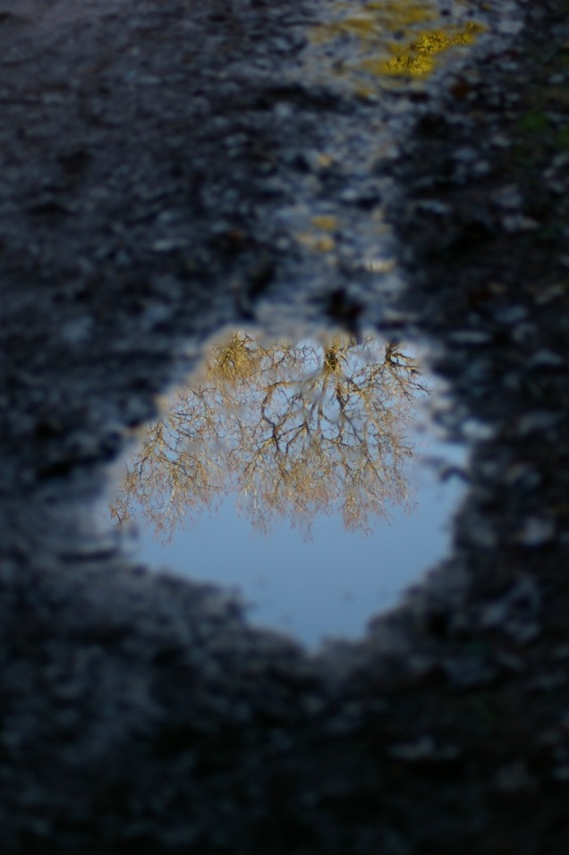 reflections in a muddy puddle