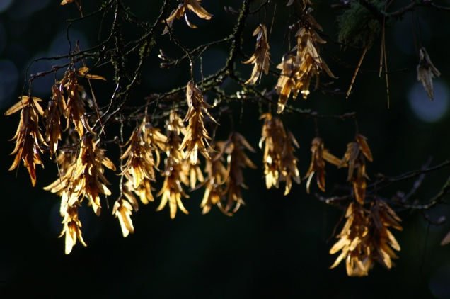 leaves in Winter sunlight