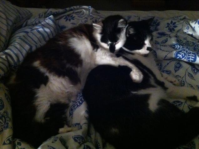 cats 6 sept 2013 - 14