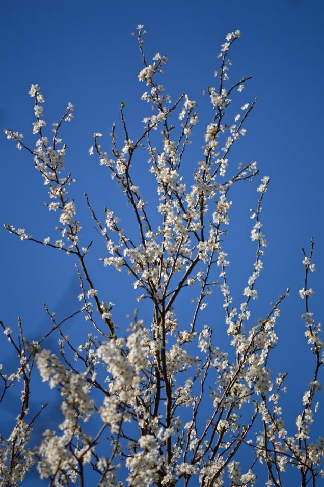 garden 16 March 2014 - 02