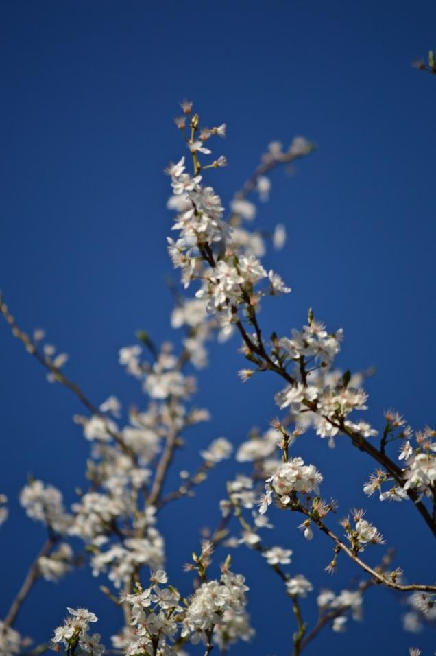 garden 16 March 2014 - 17