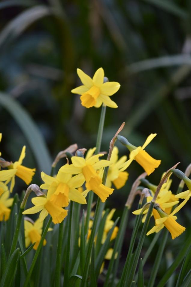 garden 16 March 2014 - 21