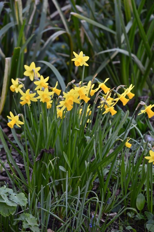 garden 16 March 2014 - 22