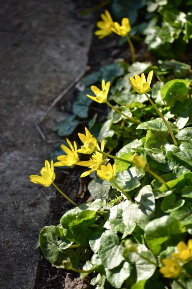 garden 16 March 2014 - 25