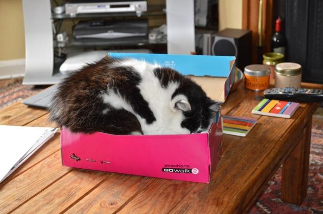 Max shoe box - 1