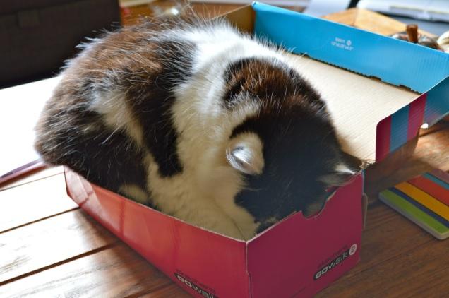 Max shoe box - 2