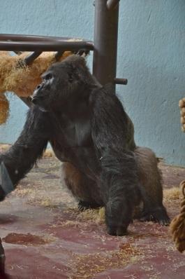 bristol zoo - 078