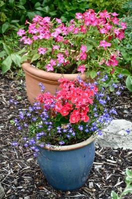 garden 3 August 2014 - 01