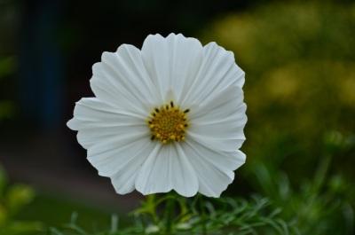 garden 3 August 2014 - 04