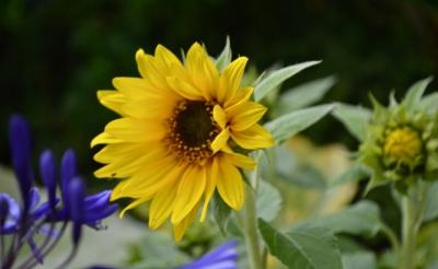 garden 3 August 2014 - 15