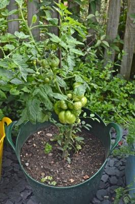 garden 3 August 2014 - 18