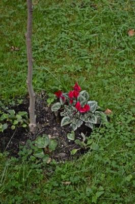 garden 3 August 2014 - 23