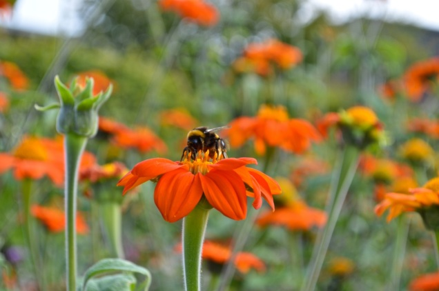 Yeo Valley Gardens 7 Sept 2014 - 034