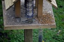 birdwatch01