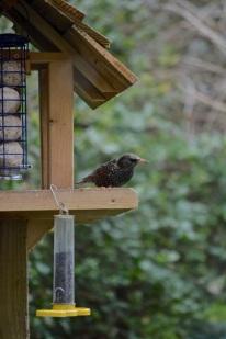 birdwatch02