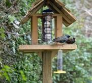 birdwatch03