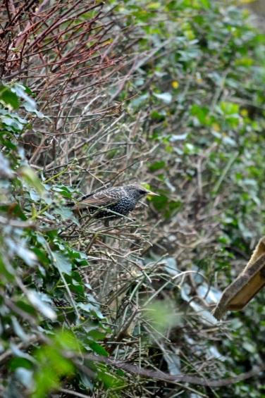 birdwatch04
