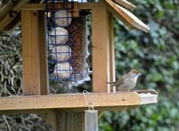 birdwatch1