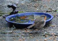 birdwatch2