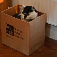 max box
